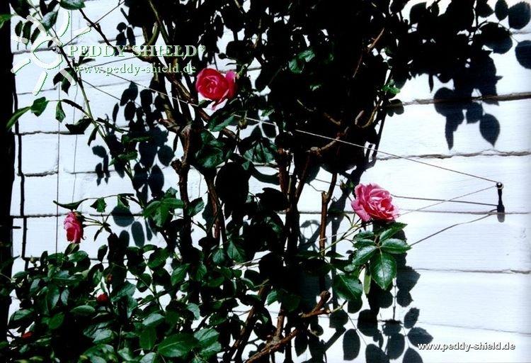 kletterhilfe rankhilfe aus edelstahl in seilspanntechnik f r alle kletterpflanzen u rosen. Black Bedroom Furniture Sets. Home Design Ideas