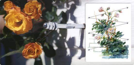 kletterhilfe rankhilfe pflanzen edelstahl. Black Bedroom Furniture Sets. Home Design Ideas
